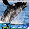 Articles - Whale Talk Magazine